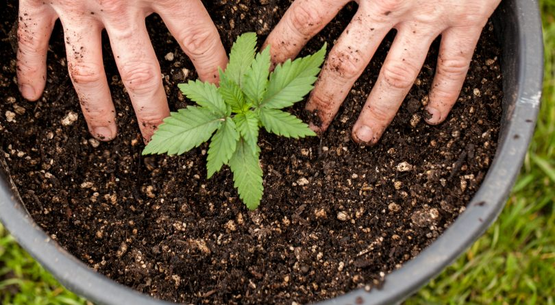 5 Challenges of Growing Cannabis Indoors and How to Overcome Them